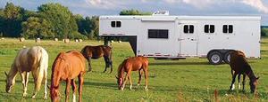 Horse Trailer Windows & Hardware